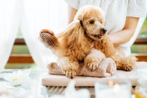 Types of Dog Grooming Brushes
