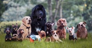 Dog Coat Types & How They Shed Differently