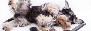 Real Ways To Stop Your Dog Shedding Excessively