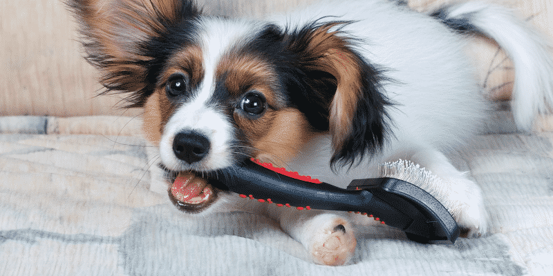 Dog Chewing on Grooming Brush