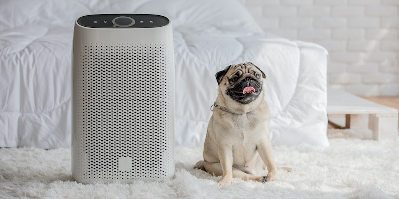 Pug dog breed sitting next to air purifier in cozy white bed room.