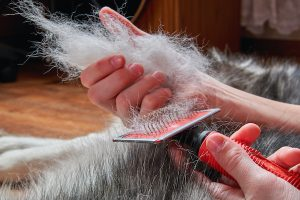 Best dog shedding brushes 2020 review feature.