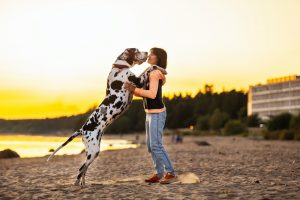 Woman playing with Great Dane dog on sand shore along water in sunlight