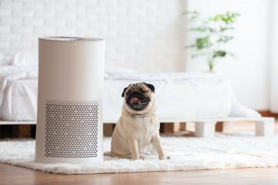 Dog Pug breed and air purifier in cozy white bedroom setting illustrating clean air and a fresh indoor environment.