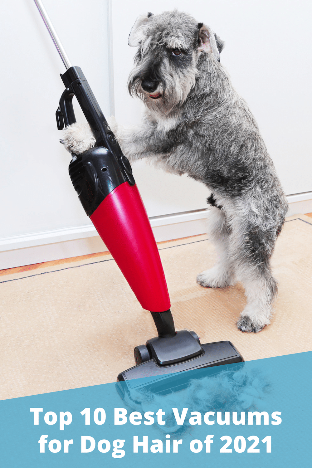 10 Best Vacuums for Dog Hair (2021 Reviews and Buyer's Guide)