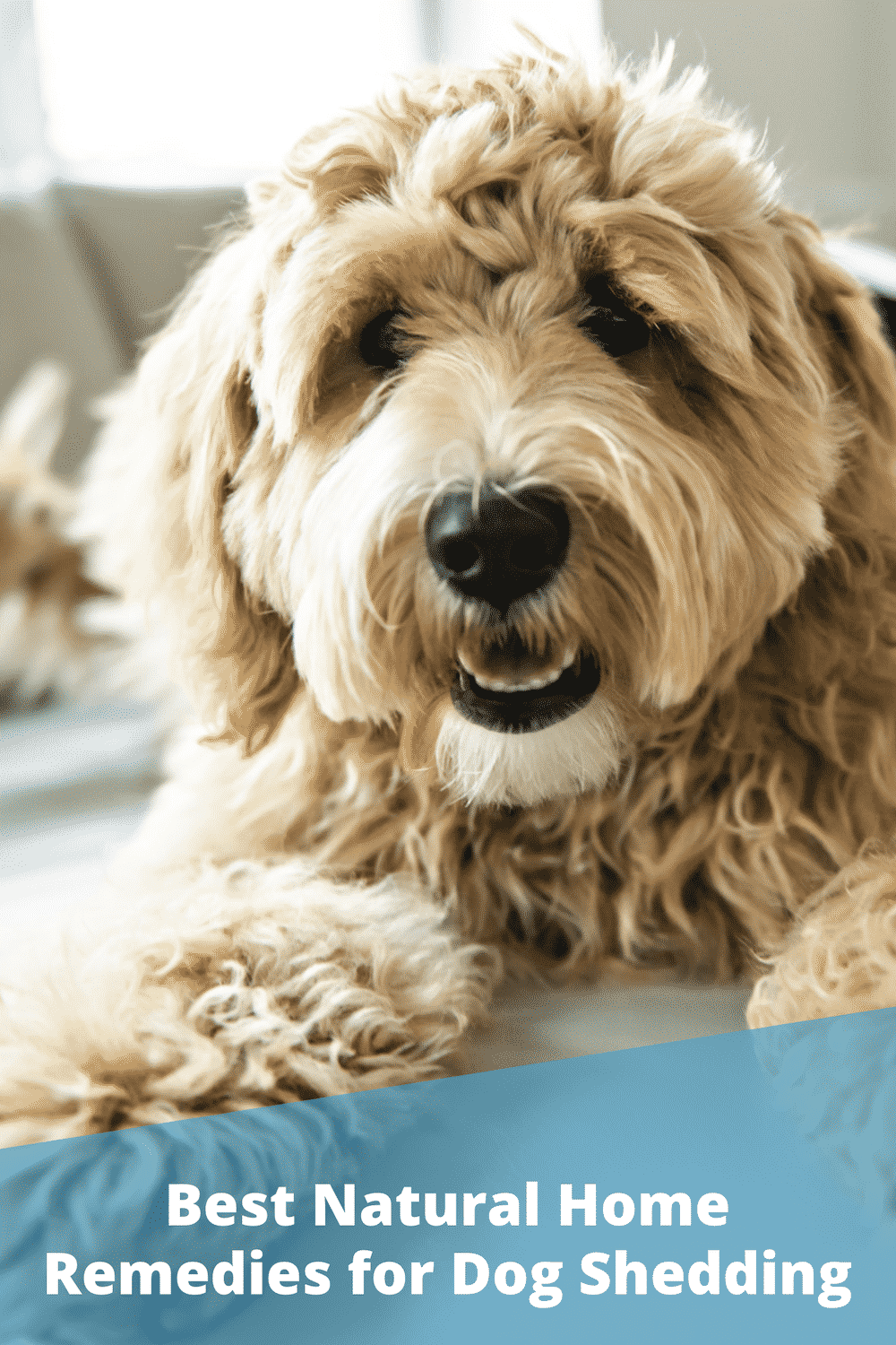 6 Natural Home Remedies for Reducing Dog Shedding