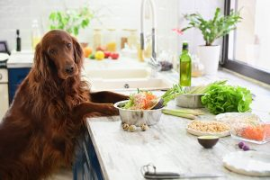 Dog in kitchen standing near healthy homemade food.