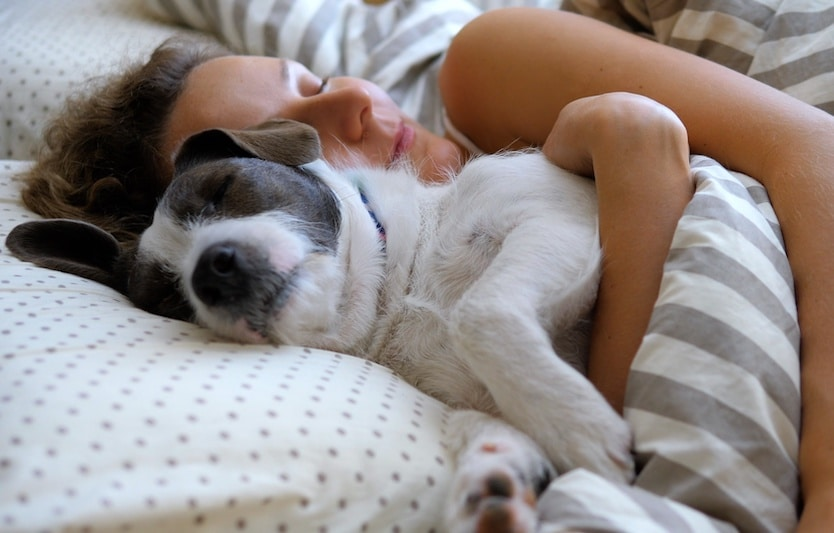 Girl And Her Pet Dog Hugging In The Bed.